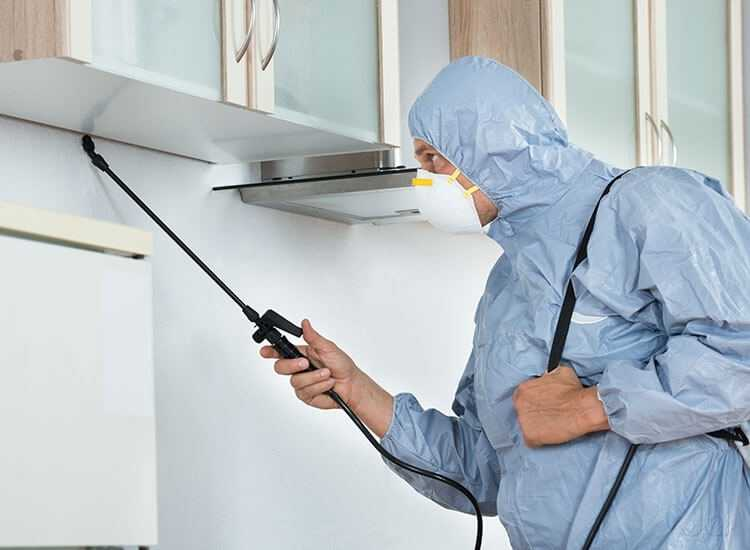 Get The Best Benefit From Pest Control Perth Services To Keep Your Home And Office From Threatening Issues Of Pests