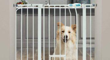 Automatic Pet Ideas